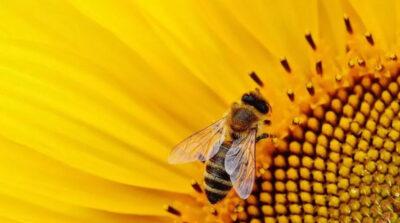 Le api stanno morendo, una tragedia per l'umanità - da la stampa del 03-09-2019