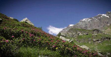 gran-paradiso-miele-alpino
